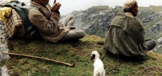 bad-shepherds