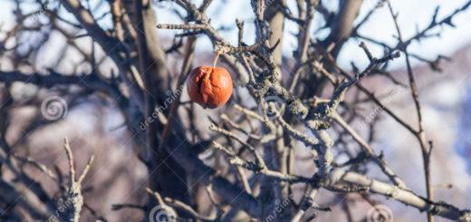 dead-apple-tree-stay-snow-54337594