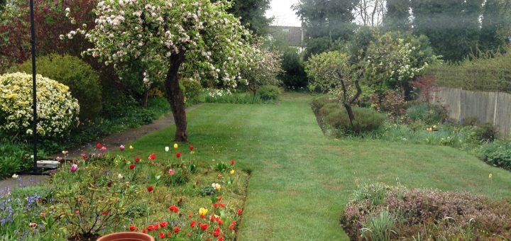 Varghese P - Apple Tree
